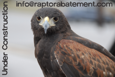 Raptor Abatement, LLC